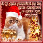 Открытка с новым годом с котиком