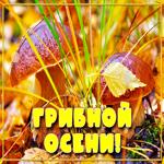 Открытка с пожеланием грибной осени