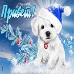 Открытка привет с собачкой и зимой