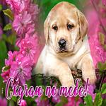Открытка скучаю с щеночком