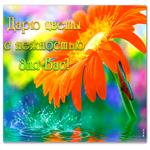 Открытка цветы с нежностью для вас