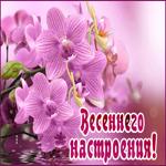 Открытка весеннего настроения с цветами