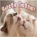 Открытка я тебя люблю с кошками
