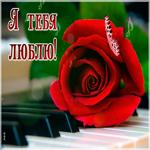 Открытка я тебя люблю с розой