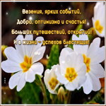 Открытка желтые тюльпаны и пожелания