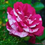 Плейкаст цветы для тебя