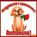Поздравляю С Днём имени Антонина