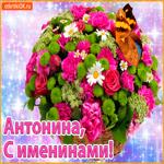 Поздравляю С именинами Антонина
