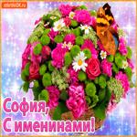 Поздравляю С именинами София