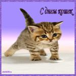Праздник день кошек