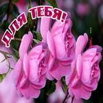 Прекрасная открытка с розами