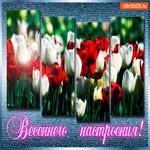 Прекрасного как тюльпаны настроения