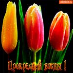 Прекрасной весны