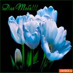 Прекрасные и нежные цветы для тебя