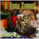 Прикольная открытка с днем кошек