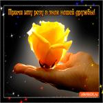 Прими розу в знак дружбы