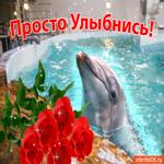Картинка хорошего настроения с дельфином