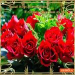 Пускай всегда цветут цветы