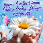 Пусть в твоей душе всегда цветут ромашки