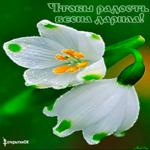 Радость весна счастье
