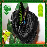 Редкий цветочек для тебя