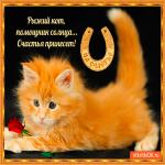 Рыжий кот счастья принесёт