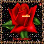 Роза для тебя, любимая