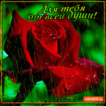 Роза для тебя от всей души