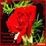 Роза радости и любви