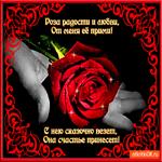 Роза счастье принесёт