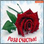 Роза счастья Для тебя