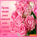 Розы на каждый день