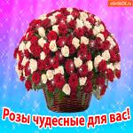 Розы чудесные для вас