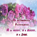 Розы сегодня твои