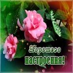 Розы в знак хорошего настроения