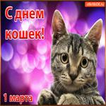 С Днём Кошек 1 Марта