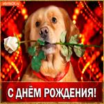 С ДНЁМ РОЖДЕНИЯ Тебя поздравляю