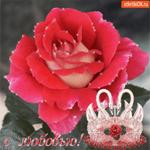 С любовью эта нежная роза