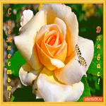 С нежностью для вас цветочек
