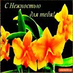 С нежностью для тебя цветы