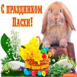 С Праздником Светлой Пасхи - Мира вашему дому