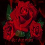Красивая открытка  с розами