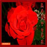 Самая нежная роза для тебя