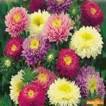 Самые красивые цветы для тебя