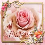 Открытка роза самой милой