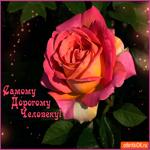 Самому дорогому человеку прекрасная роза
