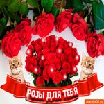 Картинка с красными розами