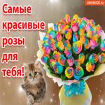 Самые красивые розы для тебя