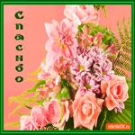 Открытка спасибо розовые розы