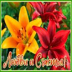 Супер открытка с цветами